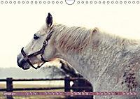 Pferde - kraftvolle Eleganz (Wandkalender 2019 DIN A4 quer) - Produktdetailbild 1