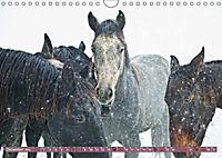 Pferde - kraftvolle Eleganz (Wandkalender 2019 DIN A4 quer) - Produktdetailbild 12