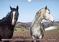 Pferde - kraftvolle Eleganz (Wandkalender 2019 DIN A4 quer) - Produktdetailbild 8