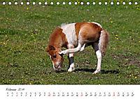 Pferde und Ponys im Paradies (Tischkalender 2019 DIN A5 quer) - Produktdetailbild 2