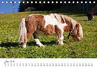 Pferde und Ponys im Paradies (Tischkalender 2019 DIN A5 quer) - Produktdetailbild 6
