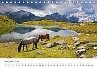 Pferde und Ponys im Paradies (Tischkalender 2019 DIN A5 quer) - Produktdetailbild 12