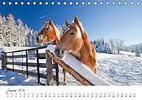 Pferde und Ponys im Paradies (Tischkalender 2019 DIN A5 quer) - Produktdetailbild 1