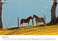 Pferde und Ponys im Paradies (Tischkalender 2019 DIN A5 quer) - Produktdetailbild 3