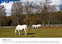 Pferde und Ponys im Paradies (Tischkalender 2019 DIN A5 quer) - Produktdetailbild 10