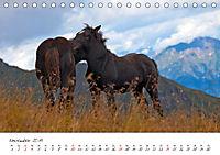 Pferde und Ponys im Paradies (Tischkalender 2019 DIN A5 quer) - Produktdetailbild 11