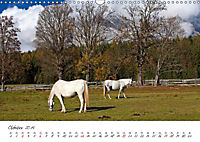 Pferde und Ponys im Paradies (Wandkalender 2019 DIN A3 quer) - Produktdetailbild 1