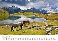 Pferde und Ponys im Paradies (Wandkalender 2019 DIN A3 quer) - Produktdetailbild 7