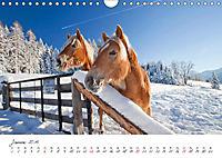Pferde und Ponys im Paradies (Wandkalender 2019 DIN A4 quer) - Produktdetailbild 1