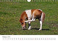Pferde und Ponys im Paradies (Wandkalender 2019 DIN A4 quer) - Produktdetailbild 2
