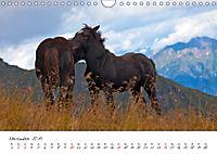 Pferde und Ponys im Paradies (Wandkalender 2019 DIN A4 quer) - Produktdetailbild 11