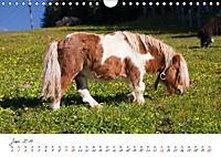 Pferde und Ponys im Paradies (Wandkalender 2019 DIN A4 quer) - Produktdetailbild 6