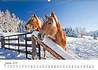 Pferde und Ponys im Paradies (Wandkalender 2019 DIN A2 quer) - Produktdetailbild 1