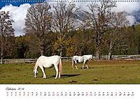 Pferde und Ponys im Paradies (Wandkalender 2019 DIN A2 quer) - Produktdetailbild 10