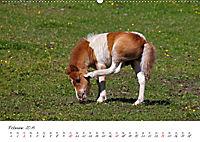 Pferde und Ponys im Paradies (Wandkalender 2019 DIN A2 quer) - Produktdetailbild 2