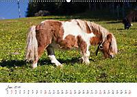 Pferde und Ponys im Paradies (Wandkalender 2019 DIN A2 quer) - Produktdetailbild 6