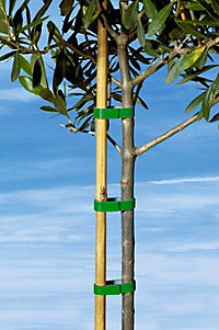Pflanzband, 7,5M - Produktdetailbild 1