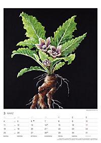 Pflanzen der Bibel 2019 - Produktdetailbild 3