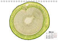 Pflanzen unter dem Mikroskop (Tischkalender 2019 DIN A5 quer) - Produktdetailbild 5