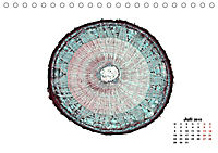 Pflanzen unter dem Mikroskop (Tischkalender 2019 DIN A5 quer) - Produktdetailbild 7