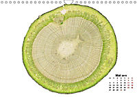 Pflanzen unter dem Mikroskop (Wandkalender 2019 DIN A4 quer) - Produktdetailbild 1
