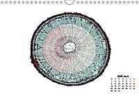 Pflanzen unter dem Mikroskop (Wandkalender 2019 DIN A4 quer) - Produktdetailbild 9