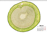 Pflanzen unter dem Mikroskop (Wandkalender 2019 DIN A3 quer) - Produktdetailbild 5