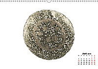 Pflanzen unter dem Mikroskop (Wandkalender 2019 DIN A3 quer) - Produktdetailbild 6