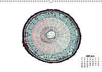 Pflanzen unter dem Mikroskop (Wandkalender 2019 DIN A3 quer) - Produktdetailbild 7