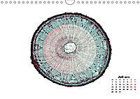 Pflanzen unter dem Mikroskop (Wandkalender 2019 DIN A4 quer) - Produktdetailbild 7