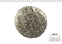 Pflanzen unter dem Mikroskop (Wandkalender 2019 DIN A4 quer) - Produktdetailbild 6