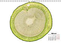Pflanzen unter dem Mikroskop (Wandkalender 2019 DIN A4 quer) - Produktdetailbild 5