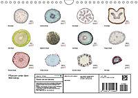 Pflanzen unter dem Mikroskop (Wandkalender 2019 DIN A4 quer) - Produktdetailbild 13