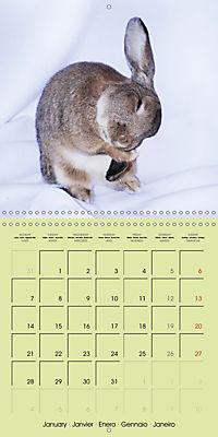 photogenic rabbits (Wall Calendar 2019 300 × 300 mm Square) - Produktdetailbild 1