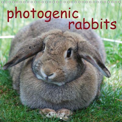 photogenic rabbits (Wall Calendar 2019 300 × 300 mm Square), Miriam Kaina