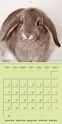 photogenic rabbits (Wall Calendar 2019 300 × 300 mm Square) - Produktdetailbild 9