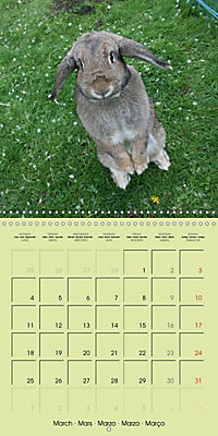 photogenic rabbits (Wall Calendar 2019 300 × 300 mm Square) - Produktdetailbild 3
