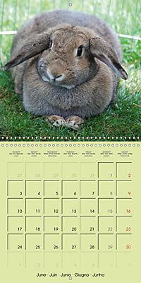 photogenic rabbits (Wall Calendar 2019 300 × 300 mm Square) - Produktdetailbild 6