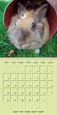 photogenic rabbits (Wall Calendar 2019 300 × 300 mm Square) - Produktdetailbild 8