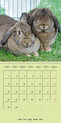 photogenic rabbits (Wall Calendar 2019 300 × 300 mm Square) - Produktdetailbild 4