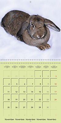 photogenic rabbits (Wall Calendar 2019 300 × 300 mm Square) - Produktdetailbild 11