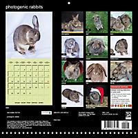 photogenic rabbits (Wall Calendar 2019 300 × 300 mm Square) - Produktdetailbild 13