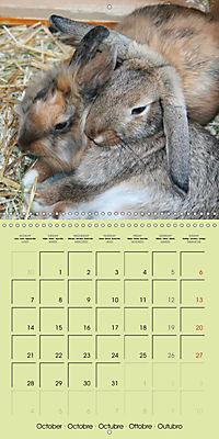 photogenic rabbits (Wall Calendar 2019 300 × 300 mm Square) - Produktdetailbild 10