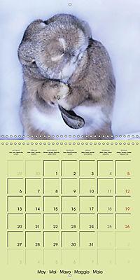 photogenic rabbits (Wall Calendar 2019 300 × 300 mm Square) - Produktdetailbild 5