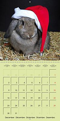 photogenic rabbits (Wall Calendar 2019 300 × 300 mm Square) - Produktdetailbild 12