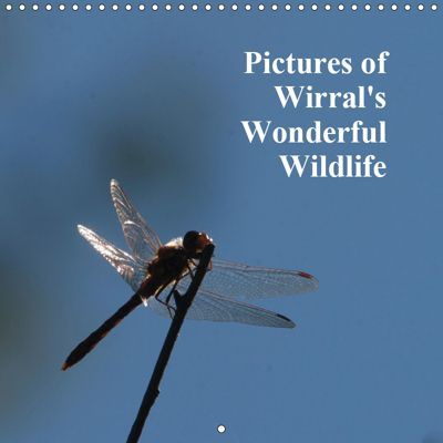 Pictures of Wirral's Wonderful Wildlife (Wall Calendar 2019 300 × 300 mm Square), Ron Thomas