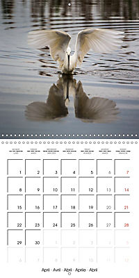 Pictures of Wirral's Wonderful Wildlife (Wall Calendar 2019 300 × 300 mm Square) - Produktdetailbild 4