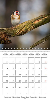 Pictures of Wirral's Wonderful Wildlife (Wall Calendar 2019 300 × 300 mm Square) - Produktdetailbild 11