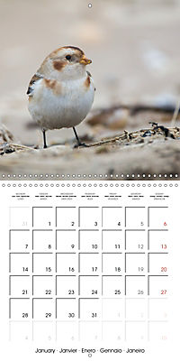 Pictures of Wirral's Wonderful Wildlife (Wall Calendar 2019 300 × 300 mm Square) - Produktdetailbild 1