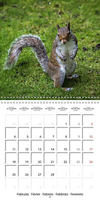 Pictures of Wirral's Wonderful Wildlife (Wall Calendar 2019 300 × 300 mm Square) - Produktdetailbild 2